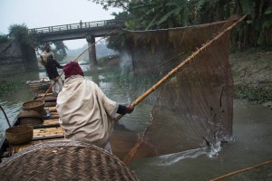 The fishermen pull the net out of the water to grab their catch. Bangladesh is one of the last places on earth where this ancient tradition is still practiced. For centuries, fishermen from this area have trained wild otters to muster fish towards their nets improving their catch significantly.