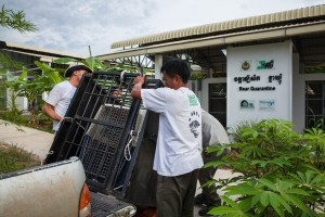 Free The Bears' team unloads its newest arrival – a moon bear cub rescued from Battambang province. The team drove over 9 hours to relocate the cub at the Quarantine Center.